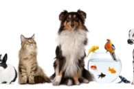 Pets in property